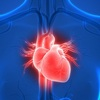 FDA Seeks Virtual Heart to Test Medical Devices