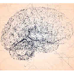 A drawing of the human brain.