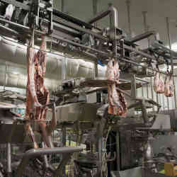 A robotic meat-cutting system.