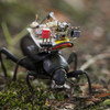 GoPro for Beetles: Researchers Create a Robotic Camera Backpack for Insects