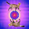 Yale Quantum Researchers Create Error-Correcting Cat