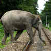Elephants vs Trains: AI Helps Ensure They Don't Collide