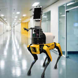 Robot Spot, who measures patients' vital signs without contact, in the halls of Boston's Brigham and Women's Hospital.