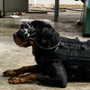 Augmented Reality Dog Goggles Could Help Protect Soldiers