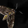 Researchers Use Flying Insects to Drop Sensors Safely