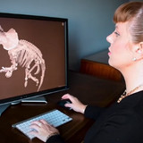 user examines dinosaur skeleton image on a screen