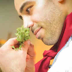 A chef smells a fresh herb.