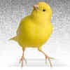 Cybersecurity Researchers Build Better 'Canary Trap'