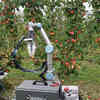 Advanced Core Processing: Robot Technology Appealing for Apple Growers